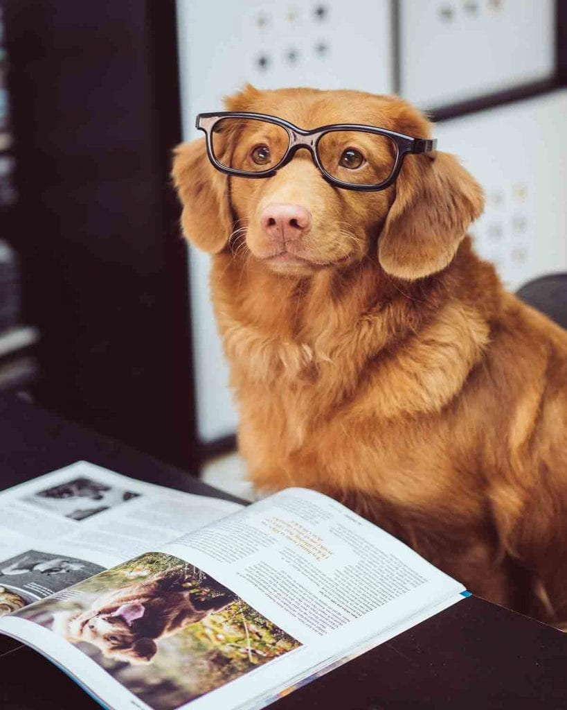 Sustainability and profitability- dog in glasses